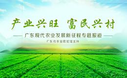 产业兴旺 富民兴村--广东现代农业发展新征程专题报道