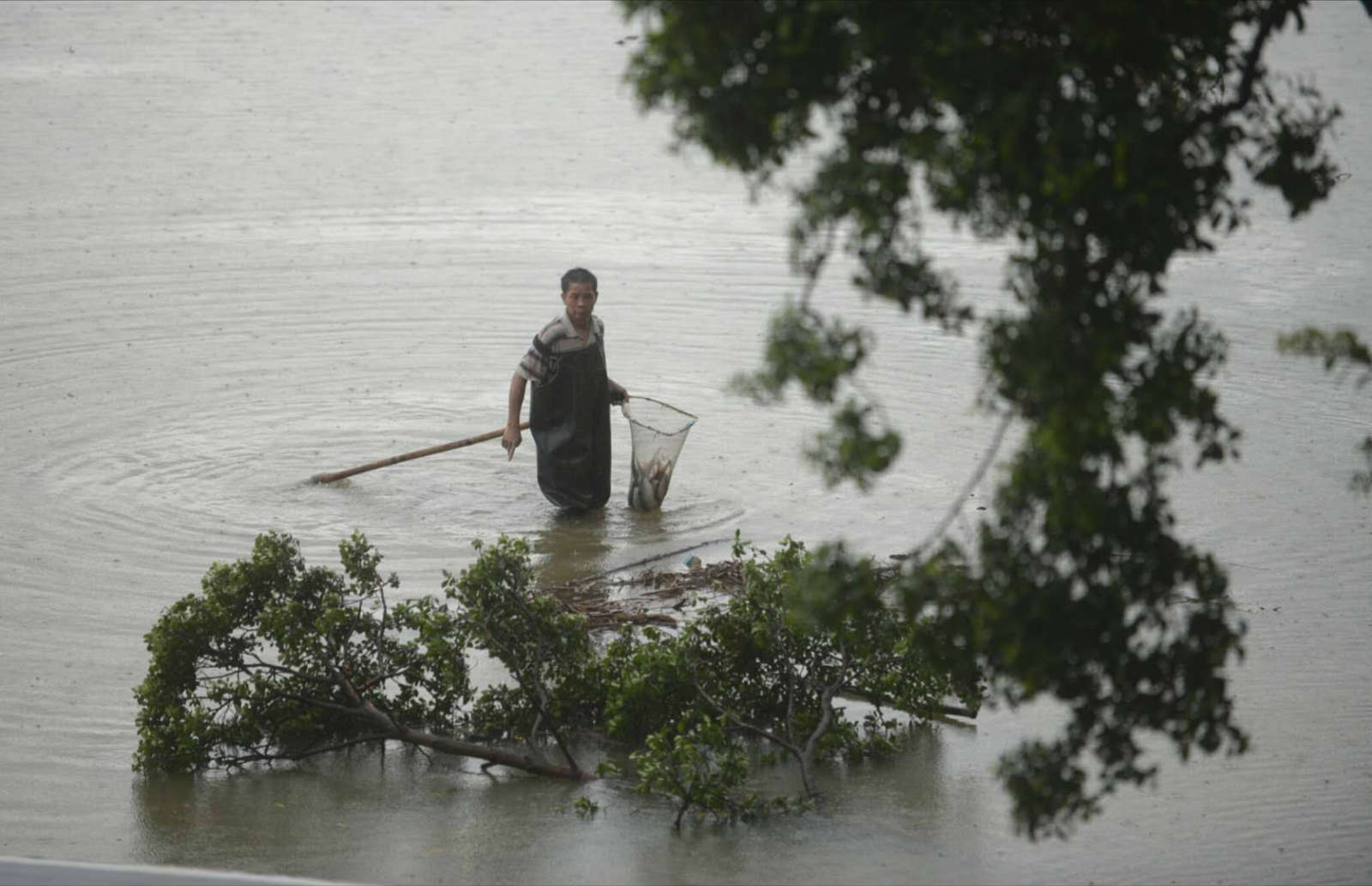 广东14市79.8万亩农作物受灾