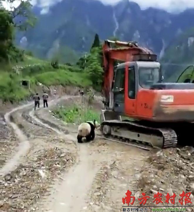 拯救中国最隐秘的乡村部落:以大熊猫为图腾,保有象形文字