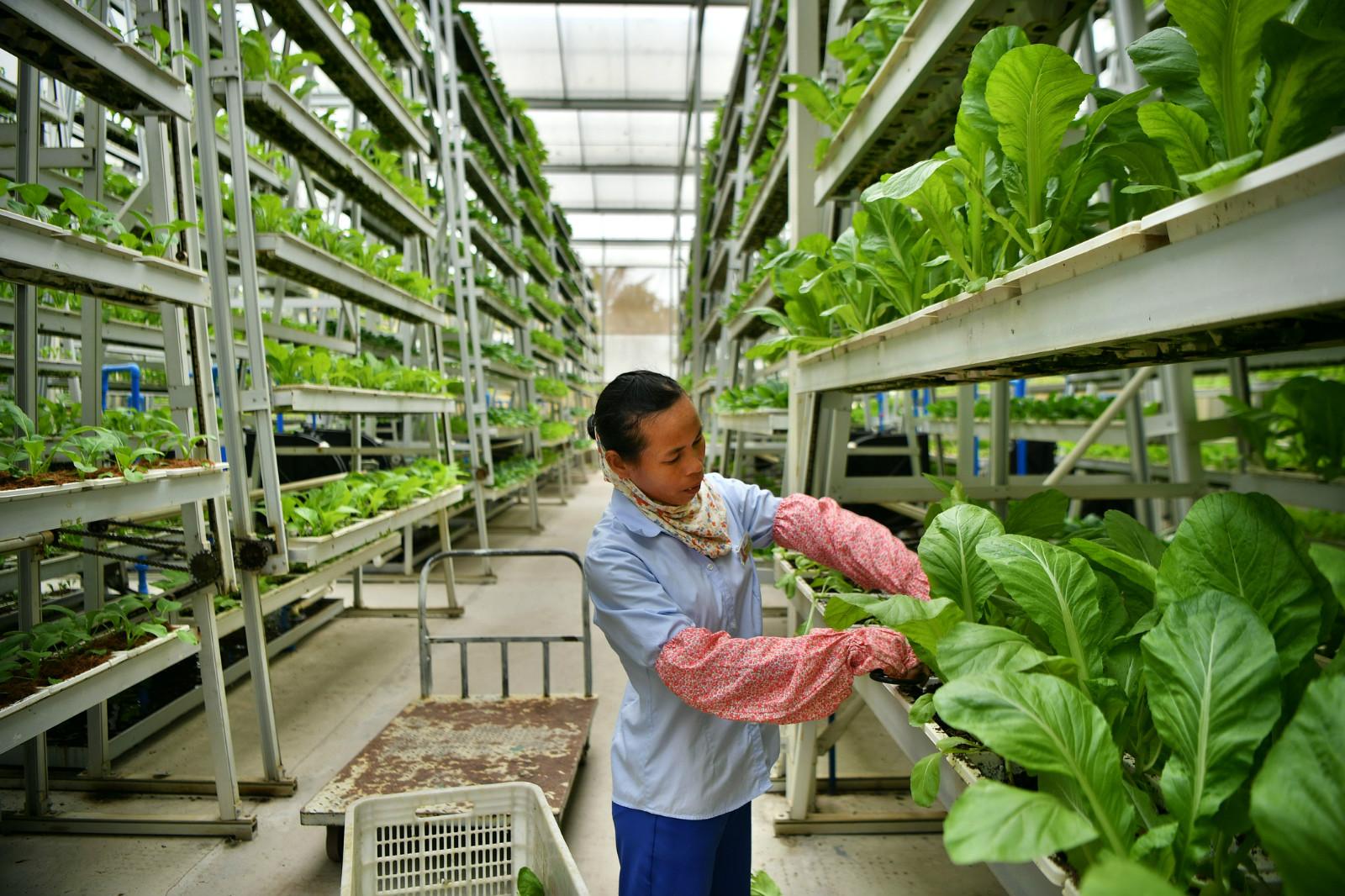粤东西北未来两年建100个省级现代农业产业园