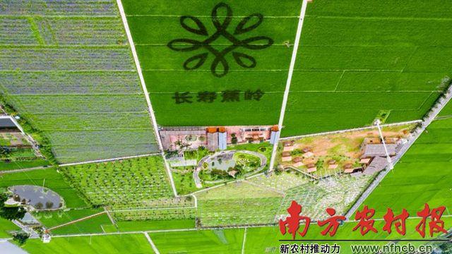2019中国特色丝苗米高峰论坛15-16日在梅州蕉岭举行