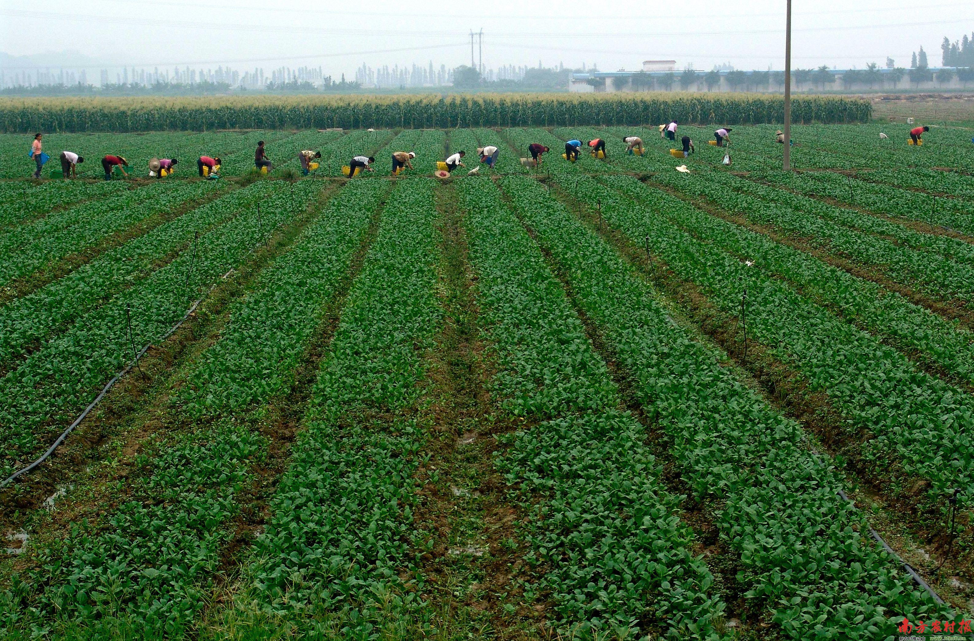 广东现代农业产业园再增50个